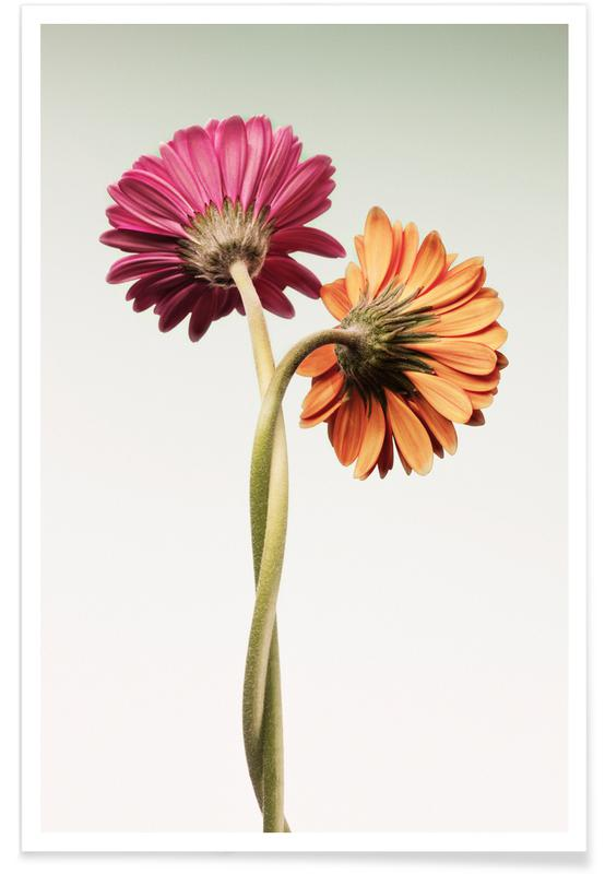 , Gerbera Daisies Entwined poster