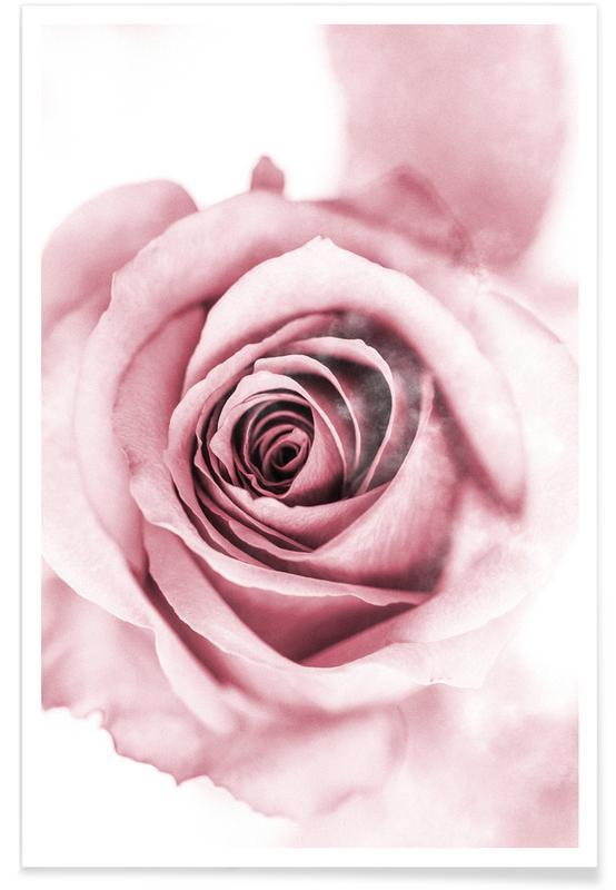 Roses, Pétales de pivoine rose affiche