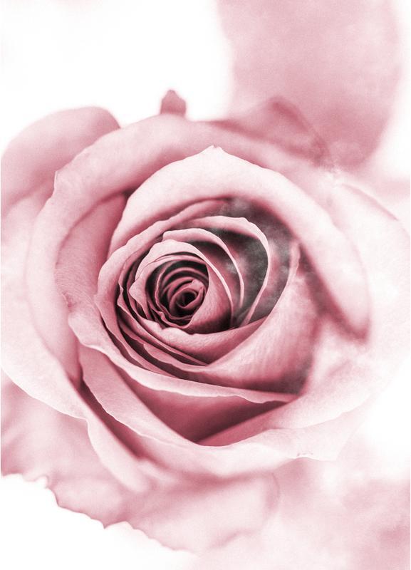 Pink Petals -Leinwandbild