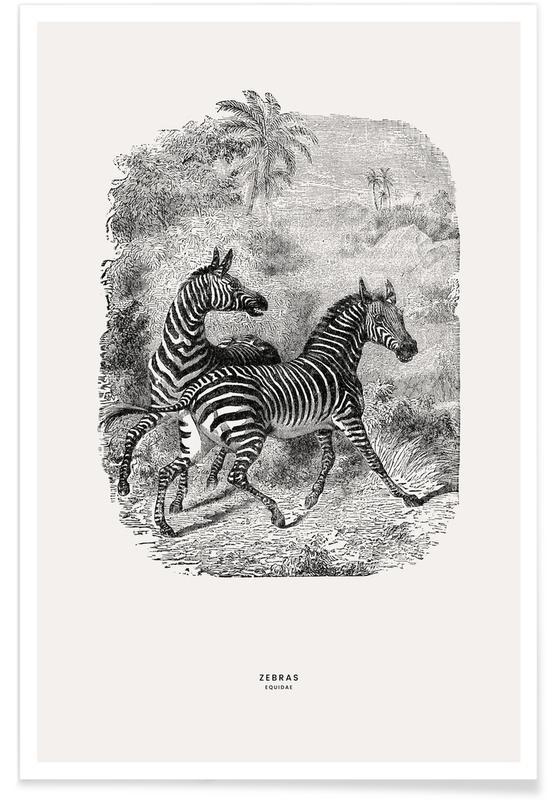 Børneværelse & kunst for børn, Zebraer, Zebras Plakat