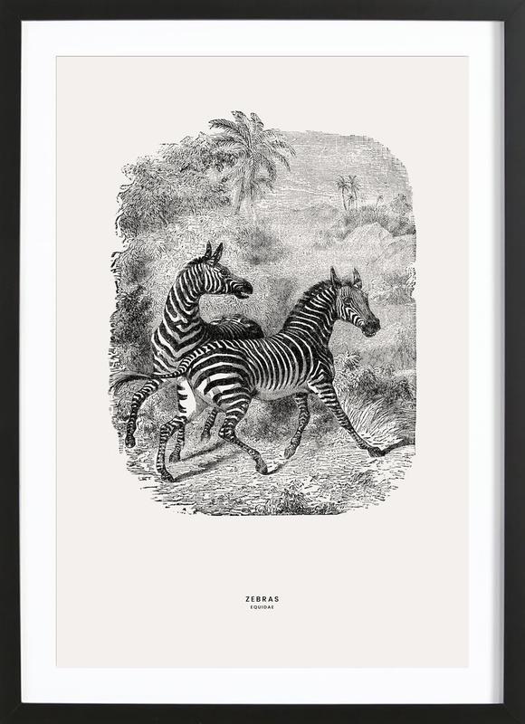 Zebras affiche sous cadre en bois