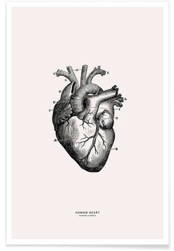Hjerter, Menneskehjerte Plakat