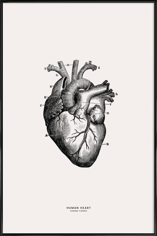 Human Heart Poster i standardram
