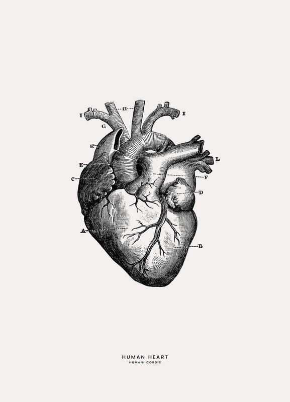 Human Heart Canvastavla