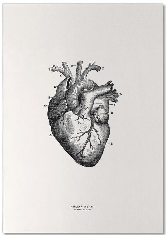 Human Heart -Notizblock