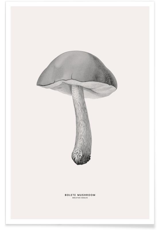 Champignons, Bolete Mushroom affiche