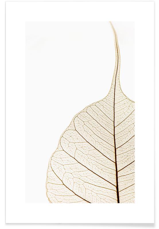 Feuilles & Plantes, Translucent Leaf affiche