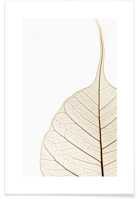 Translucent Leaf -Poster