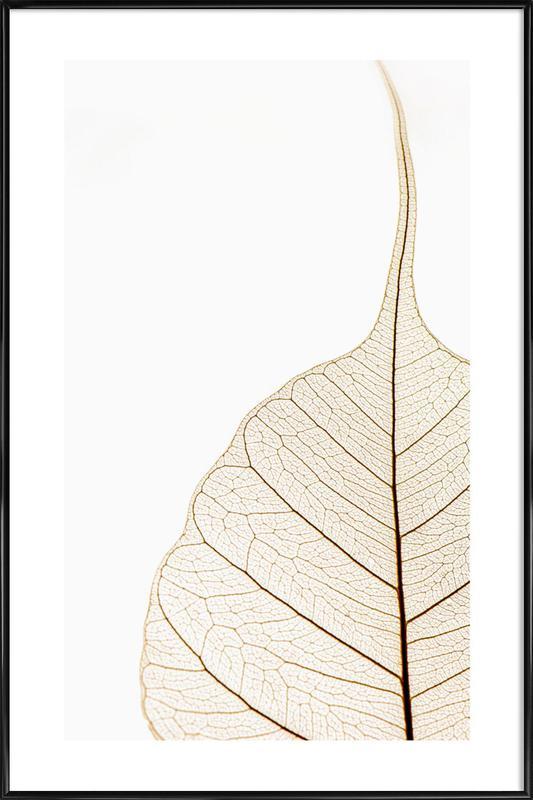 Translucent Leaf Framed Poster