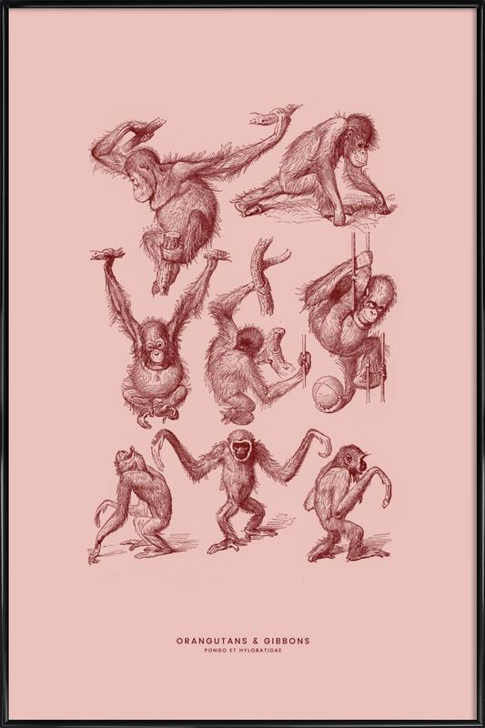 Orangutans and Gibbons II Poster i standardram