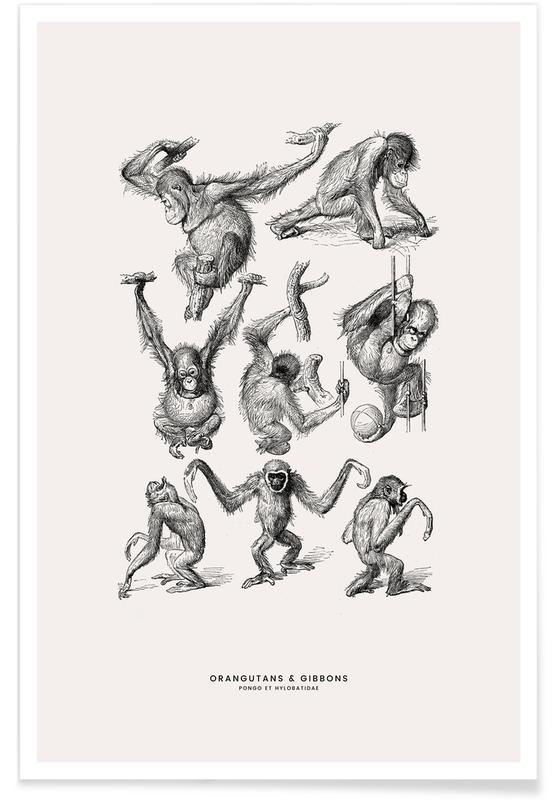 Aber, Børneværelse & kunst for børn, Orangutans and Gibbons Plakat