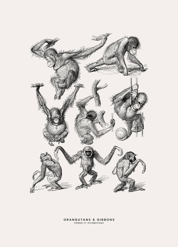Orangutans and Gibbons Canvastavla