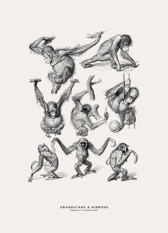 Orangutans and Gibbons toile
