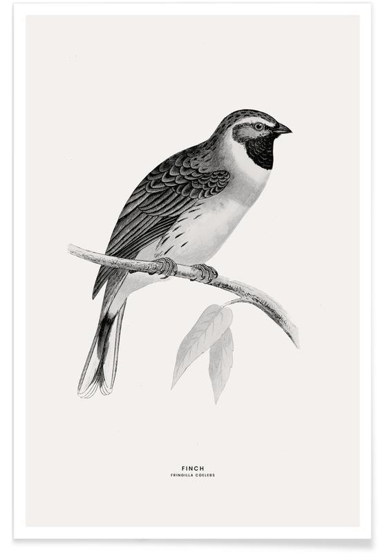 , Finch Plakat