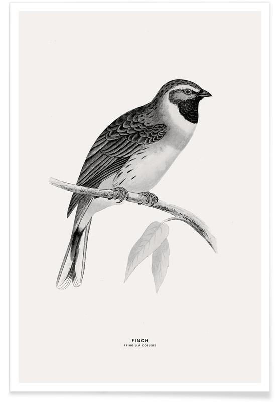 Finch Poster