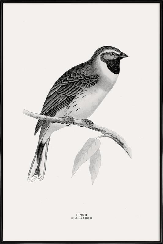 Finch Poster i standardram