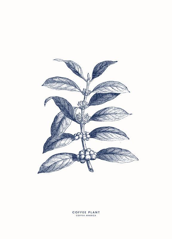 Coffee Plant II toile