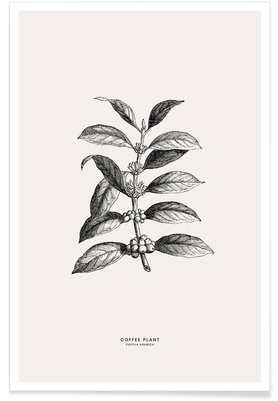 Coffee Plant -Poster