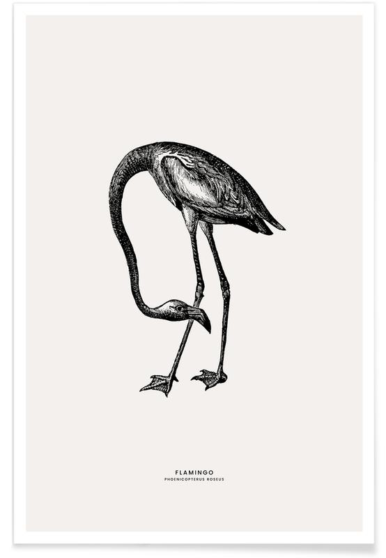 Arte per bambini, Fenicotteri, Flamingo poster