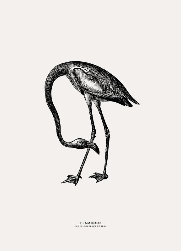 Flamingo toile