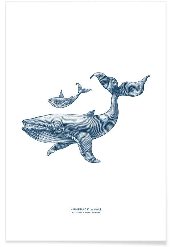 Wale, Kinderzimmer & Kunst für Kinder, Humpback Whale II -Poster