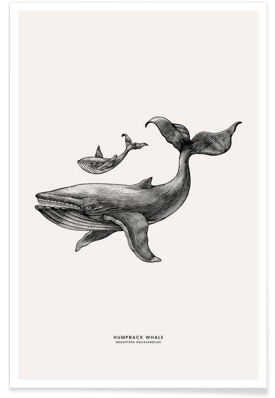 Børneværelse & kunst for børn, Hvaler, Humpback Whale Plakat