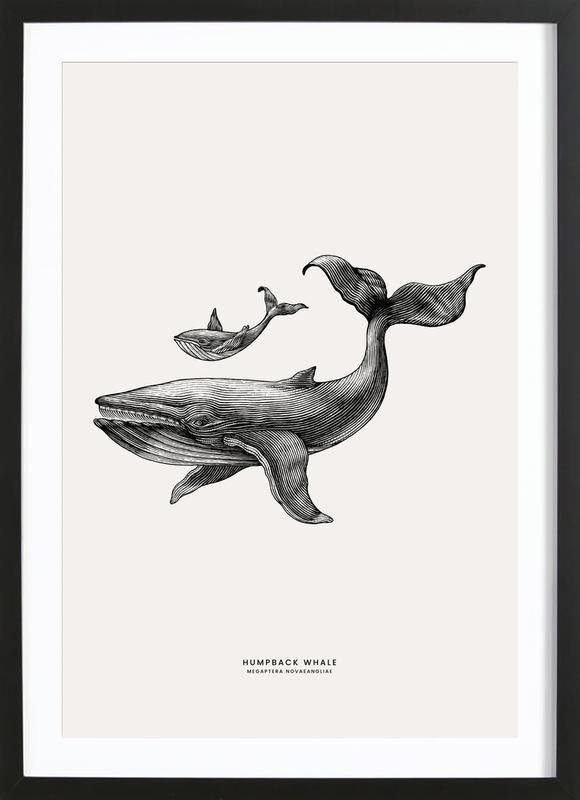 Humpback Whale -Bild mit Holzrahmen
