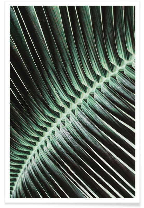 Hojas y plantas, Palmas, Curved Palm póster