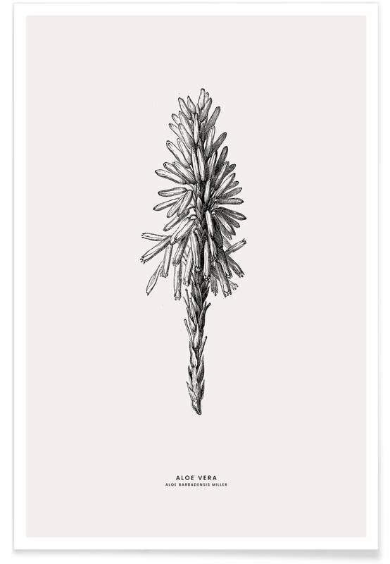 Kaktus, Blätter & Pflanzen, Aloe Vera -Poster