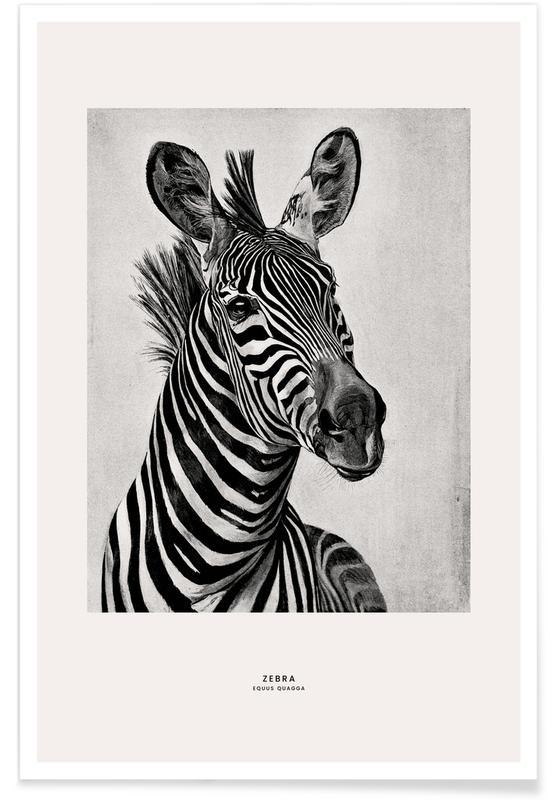 Zebra Portrait poster