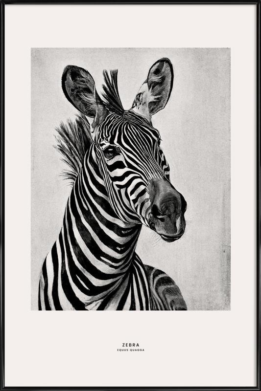 Zebra Portrait Poster i standardram