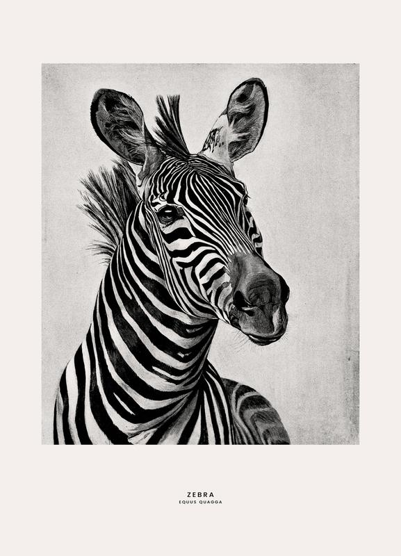 Zebra Portrait -Leinwandbild