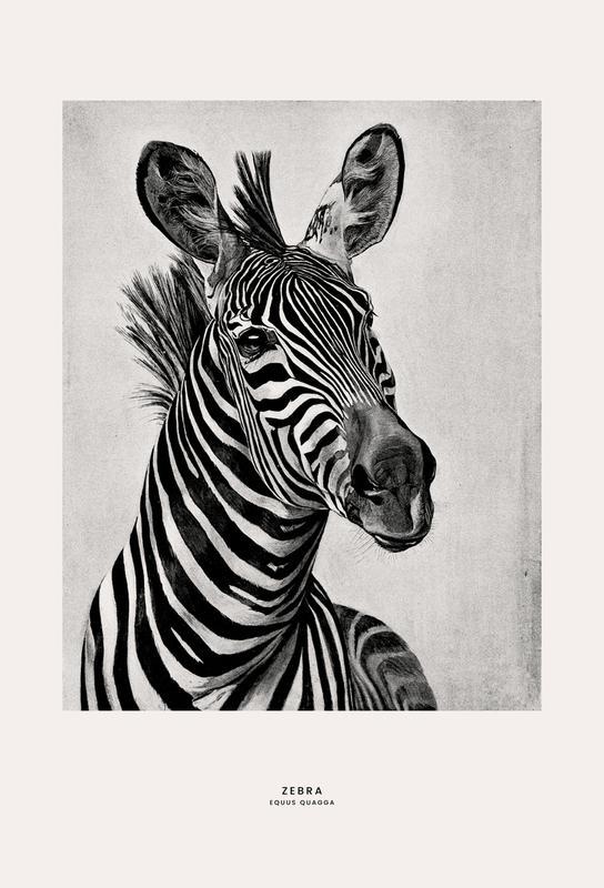 Zebra Portrait Aluminium Print