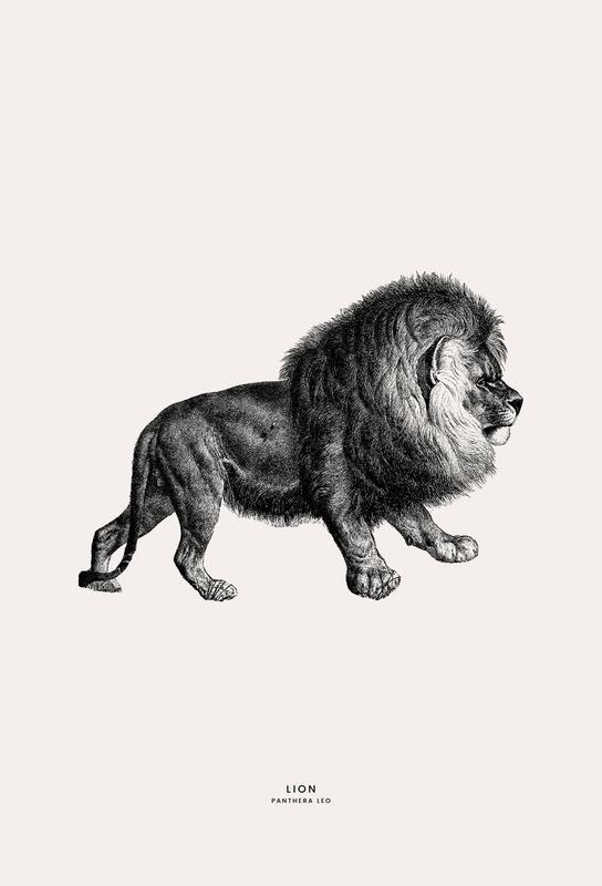 Lion Aluminiumtavla