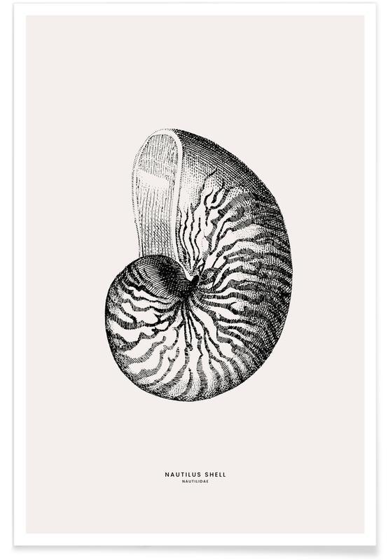, Conchiglia di Nautilus poster