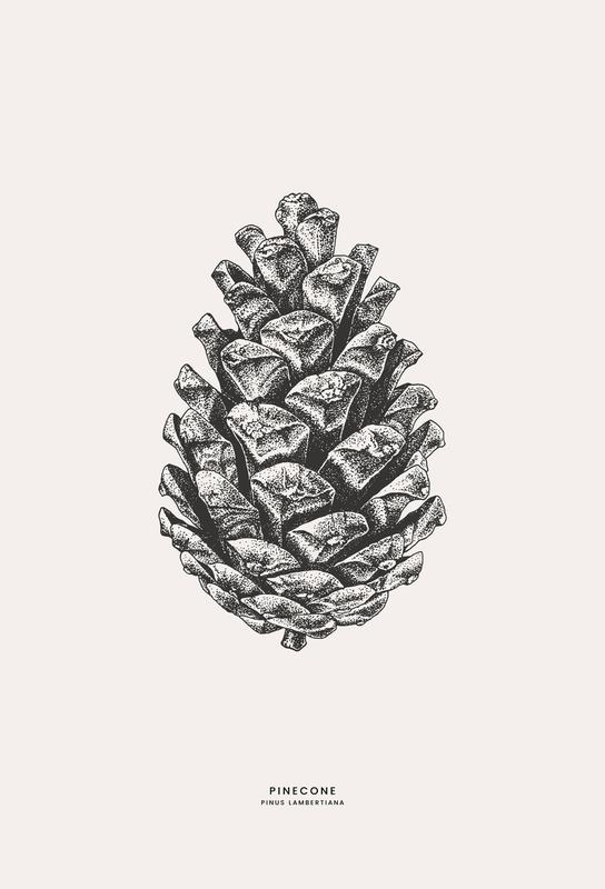 Pinecone Aluminiumtavla