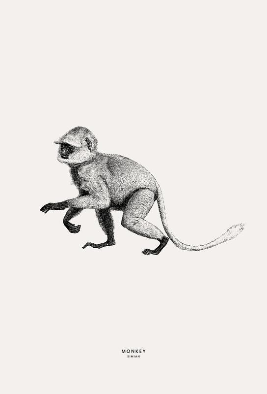Monkey Akrylglastavla