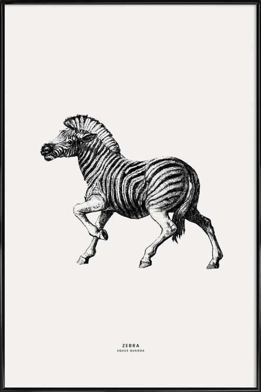 Zebra affiche encadrée