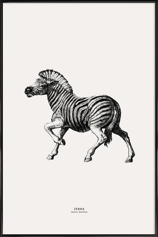 Zebra Poster i standardram