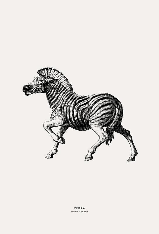 Zebra Aluminiumtavla