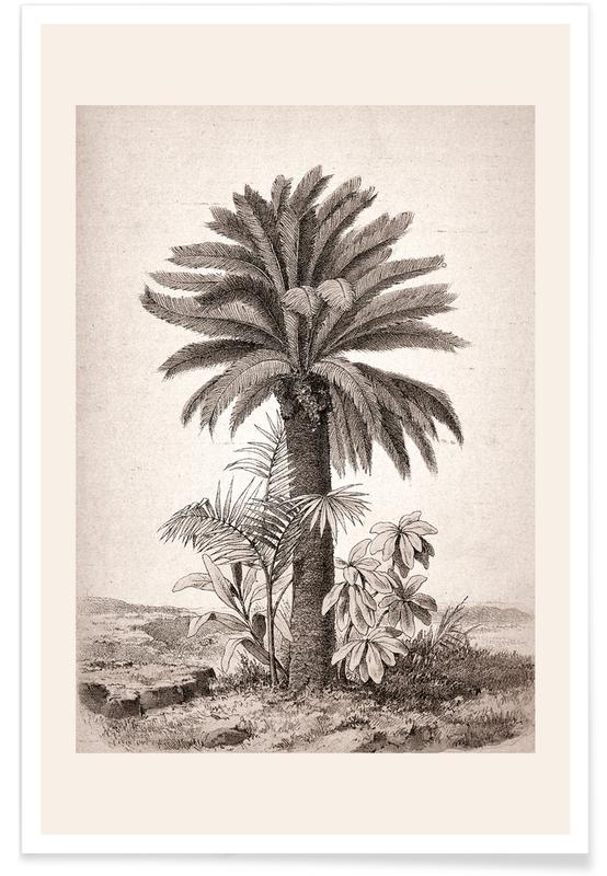 Palmer, Sago Palm Plakat