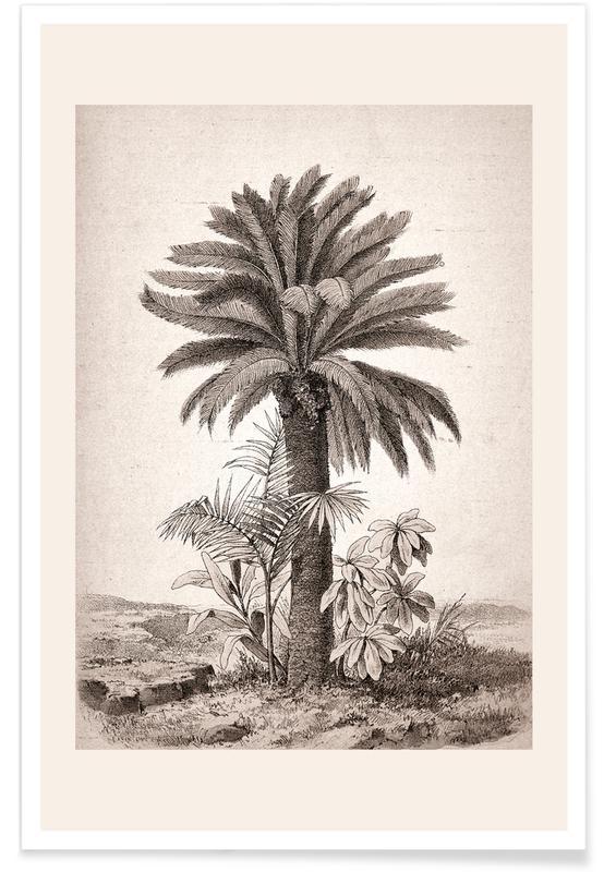 Sago Palm Poster