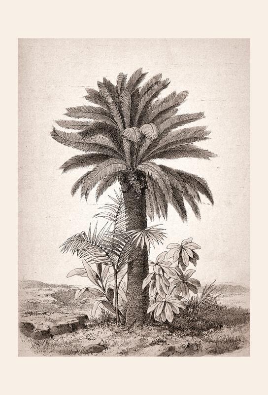 Sago Palm tableau en verre
