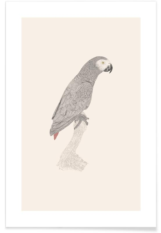 African Parrot poster