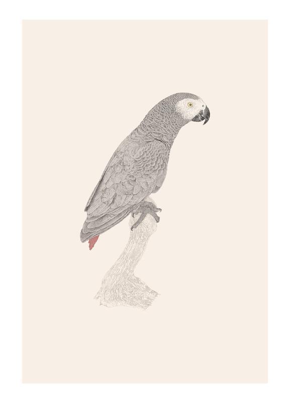 African Parrot -Leinwandbild
