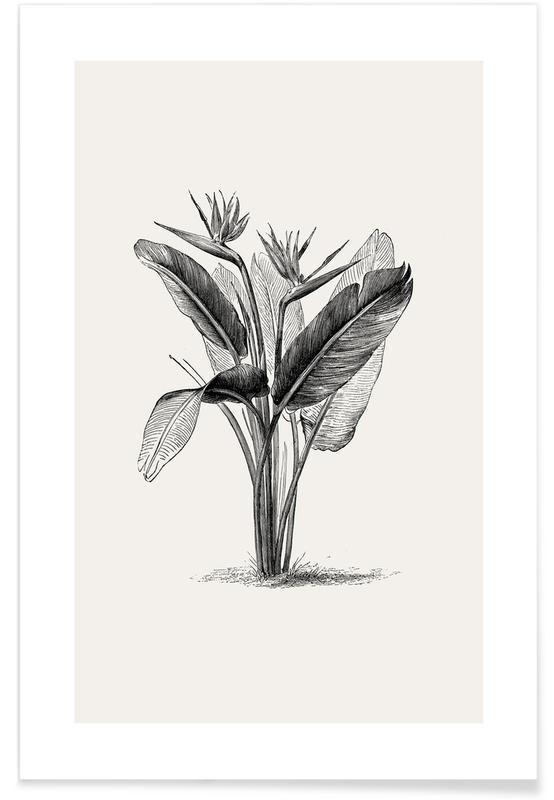 Crane Flower -Poster