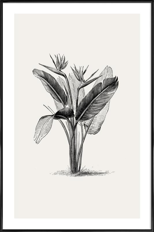 Crane Flower Poster i standardram