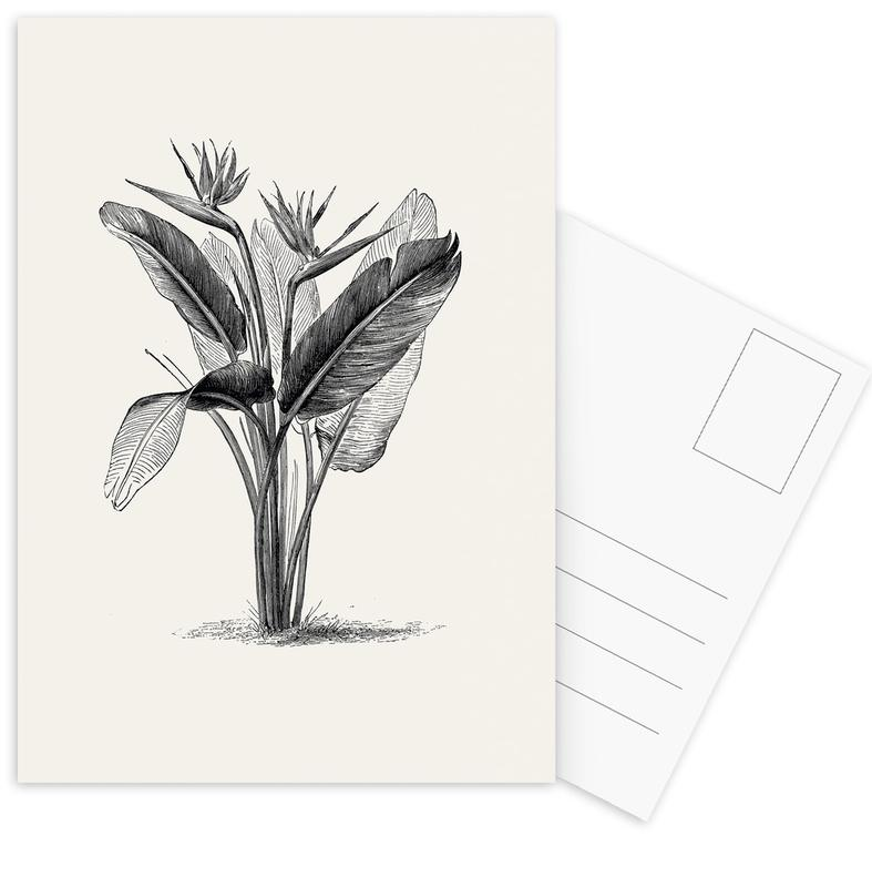 Crane Flower -Postkartenset