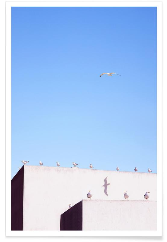 Architectural Details, Seagulls, Gang Meeting Poster