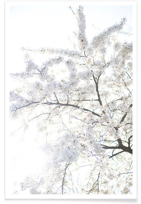 Cherry Blossoms 3 -Poster